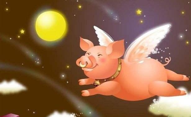 飞猪可爱手机壁纸